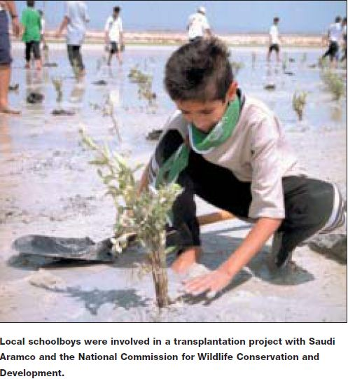 صبي سعودي يغرس شجيرة منغروف